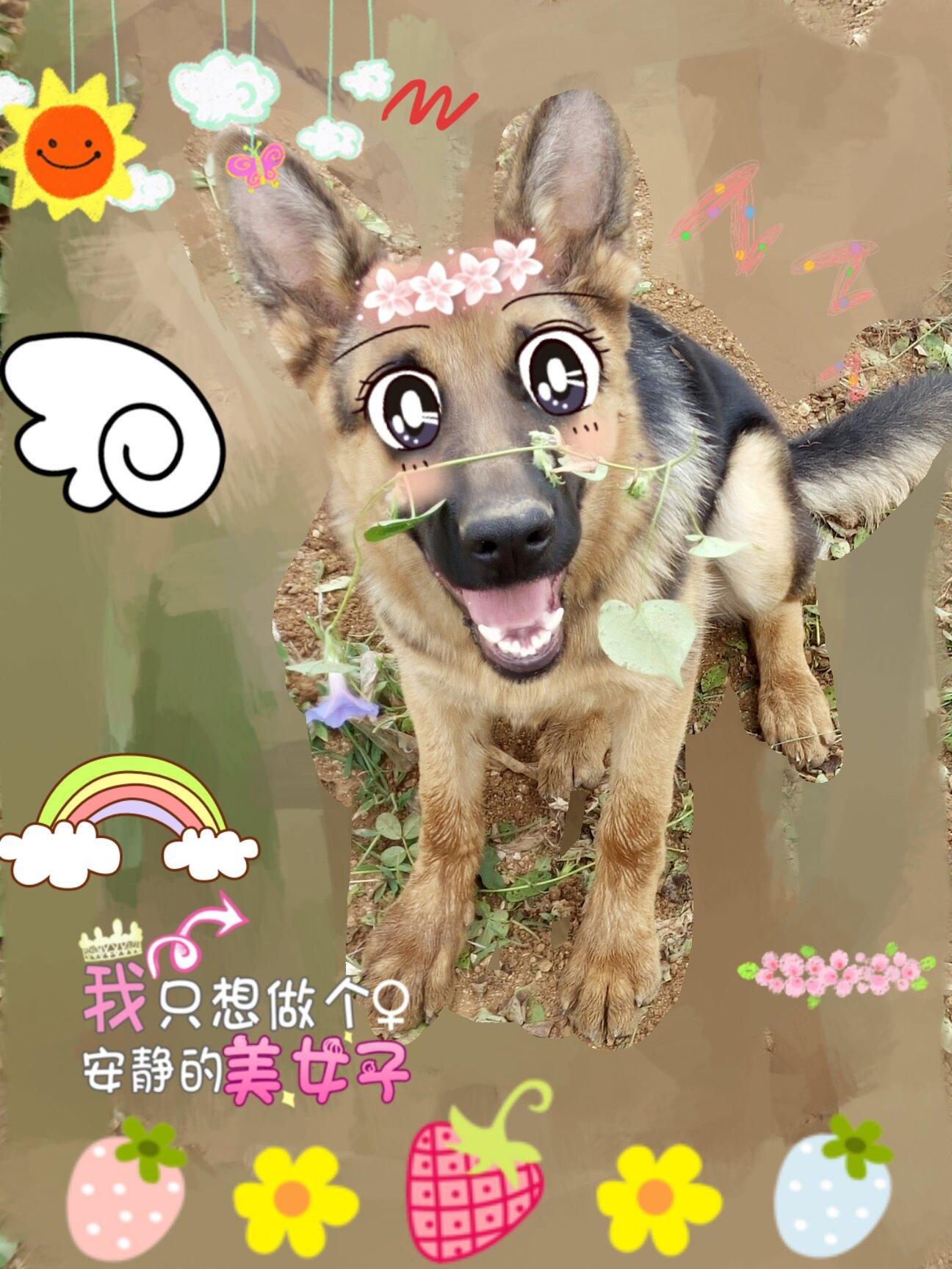 壁纸 动漫 动物 狗 狗狗 卡通 漫画 头像 1296_1728 竖版 竖屏 手机